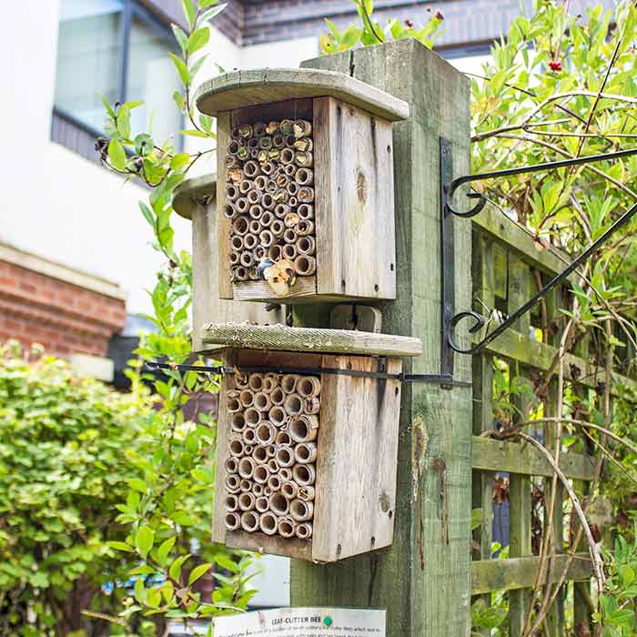 Bug hotel in the hospice gardens